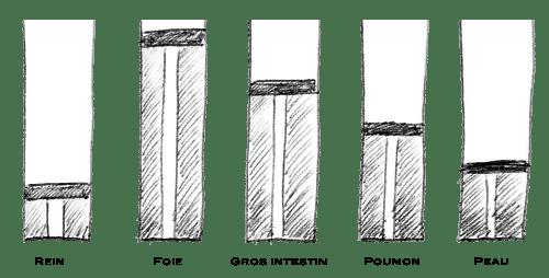 La pompe émonctorielle